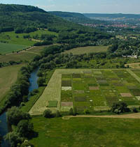 Jena Experiment Aerial Photograph 2006