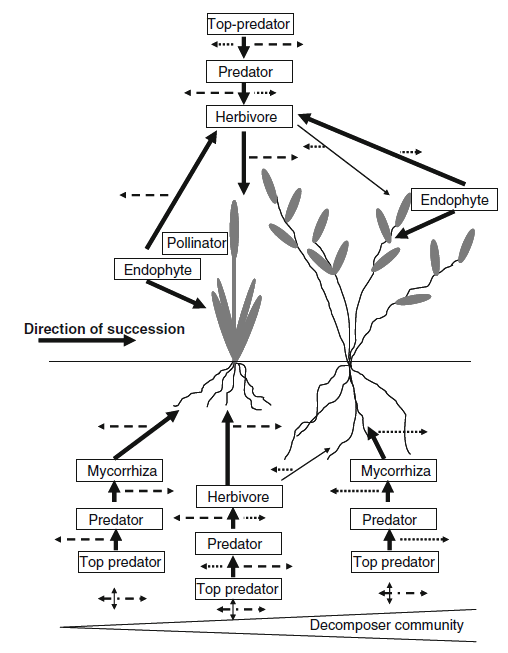 Network of above- and belowground interactions