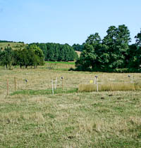 Grassland exclosure plot