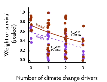 Number of climate change drivers and herbivore performance
