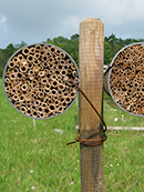 trap nest for wild bees, wasps and their antagonists