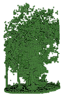 3D voxels of a beech tree